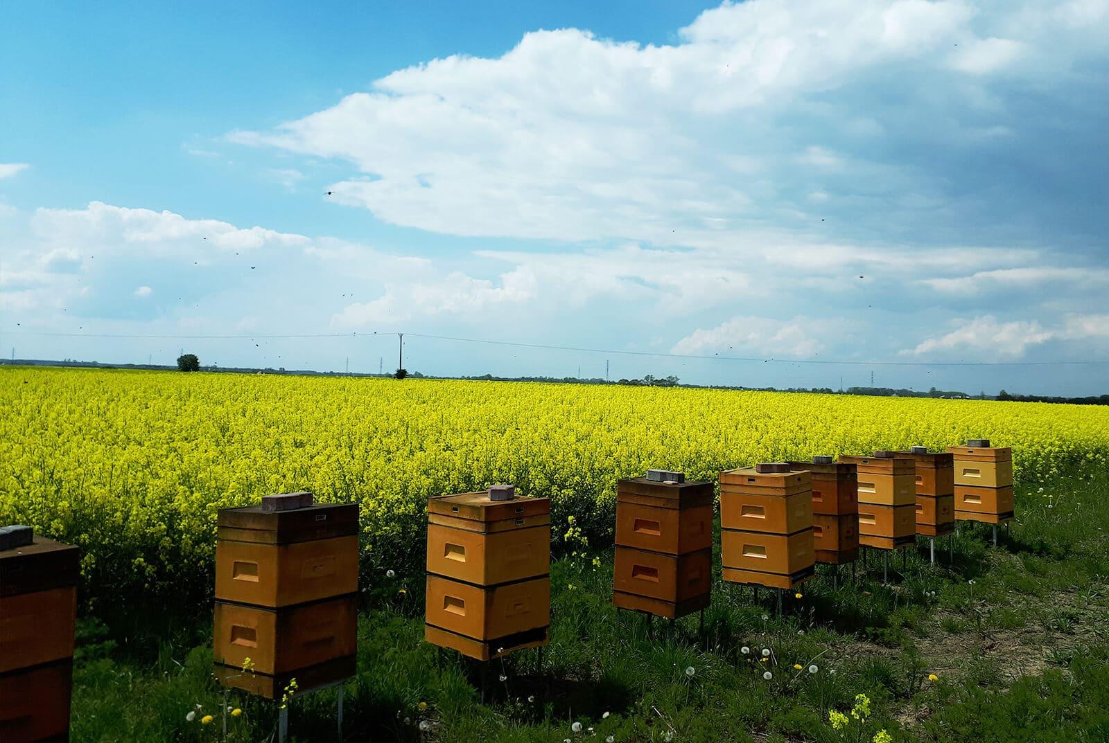 pszczoly w pracy